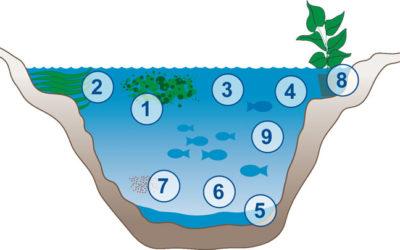 Teichpflegeprodukte