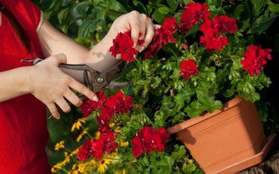 Beet und Balkonpflanzen