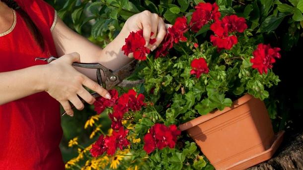 beet_und_balkonpflanzen