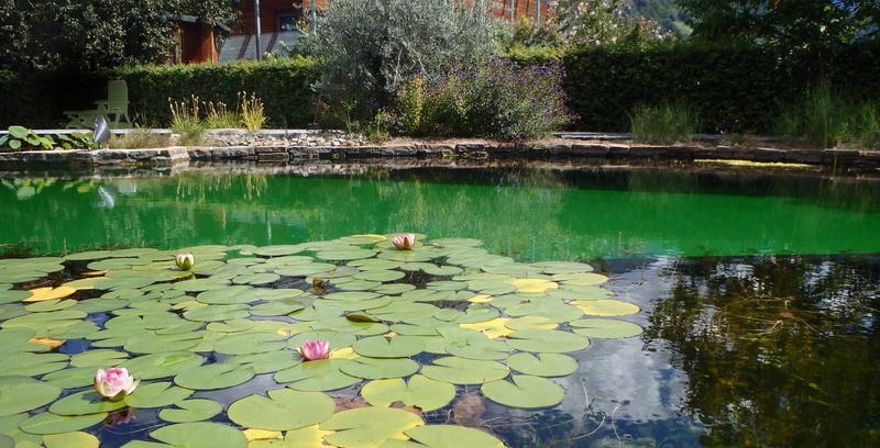 Biopiscina trattamento acque biologico