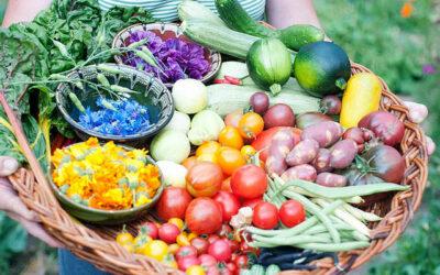 Unser Gemüse